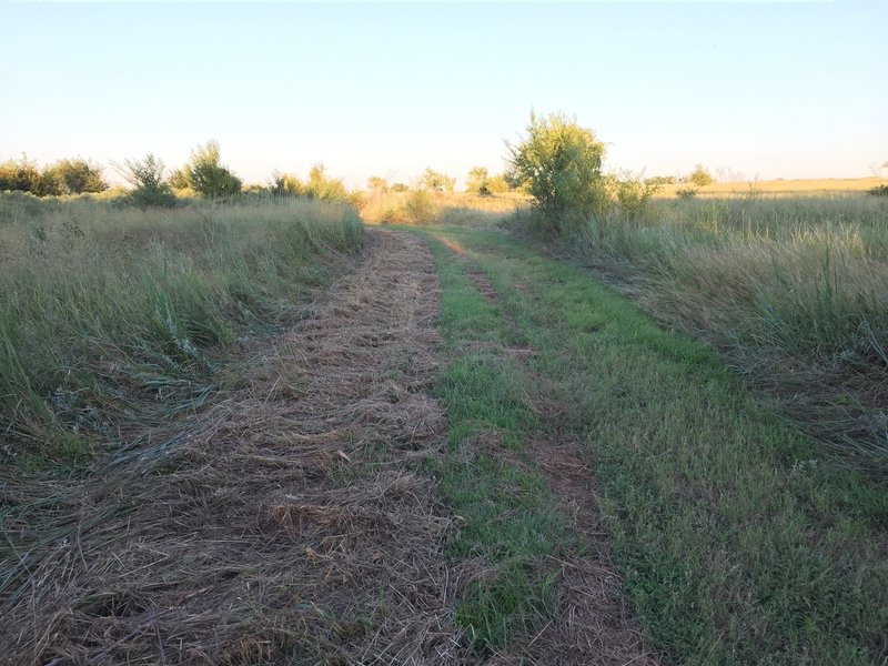 Mown section with locust trees.