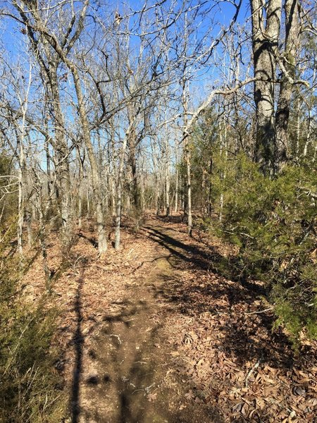 The woods surrounding Creek Run are a mix of old growth oak and blackjack, very neat trees.