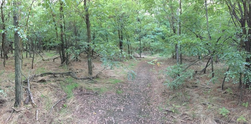 All the other wooded areas seem dark; this section is surprisingly light and open