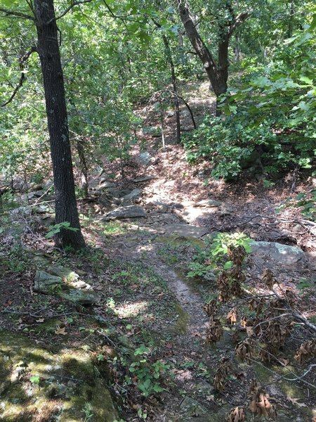 The trail is actually very similar to Badger Creek at Fall River's trail.