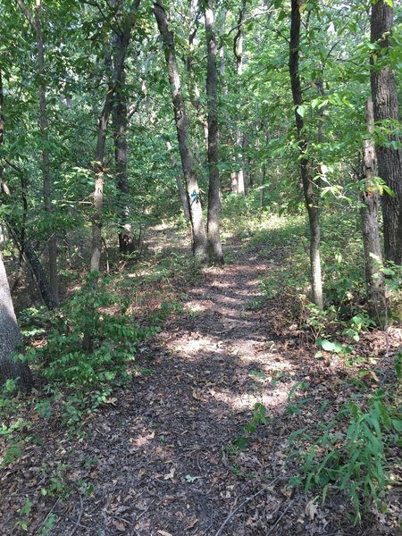This trail is very similar to Fall River too, but it needs some reroutes to improve the trail.