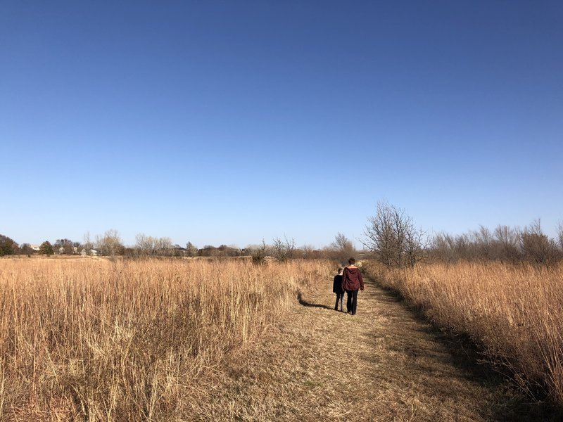 More of the big and little bluestem grassland.