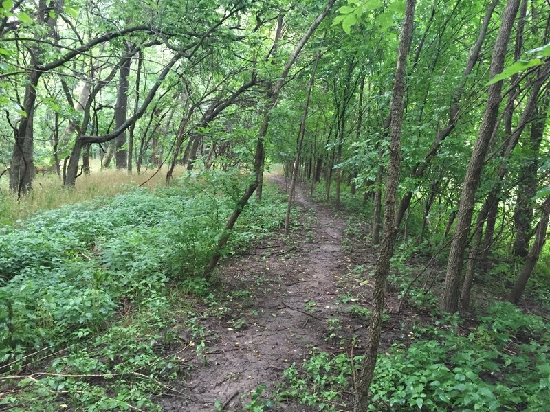 Just about into the wooded area, trail is pretty flat, but fun.