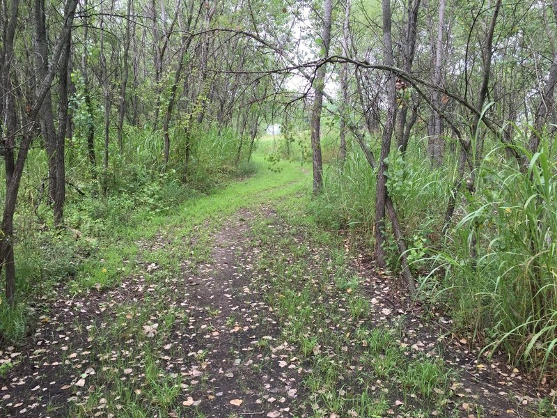 Nothing technical on this trail, but a great place to do several laps and get away from pavement.