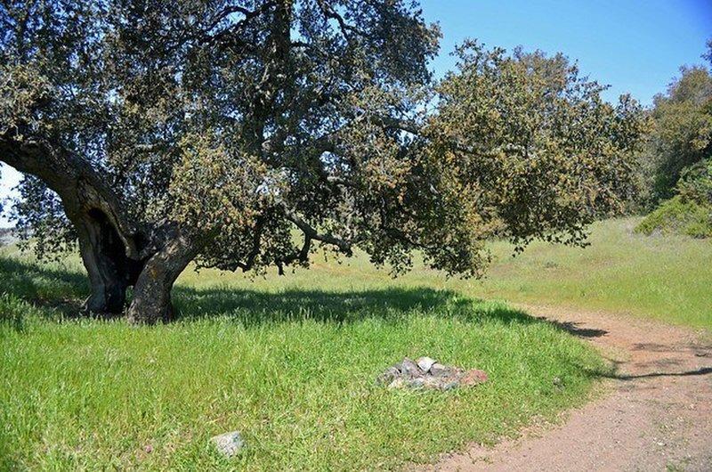 Near the meadow