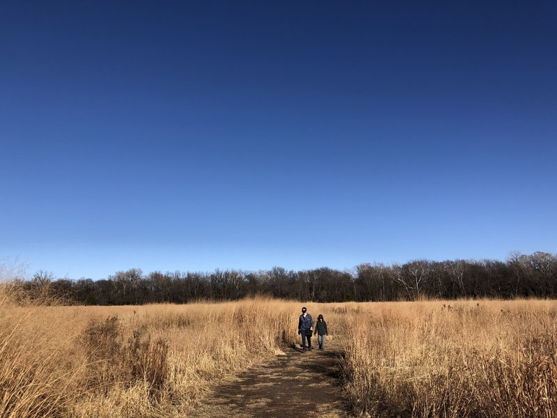 Natural prairie grass are of big and little bluestem