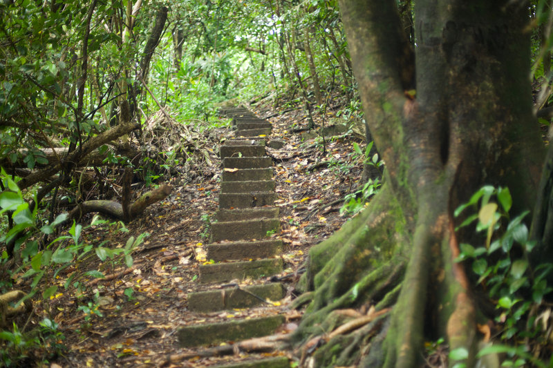 There are a series of stairs that you have to climb along the World War 2 Heritage trail. These date back to the 1940s and allowed soldiers to traverse the ridge line.