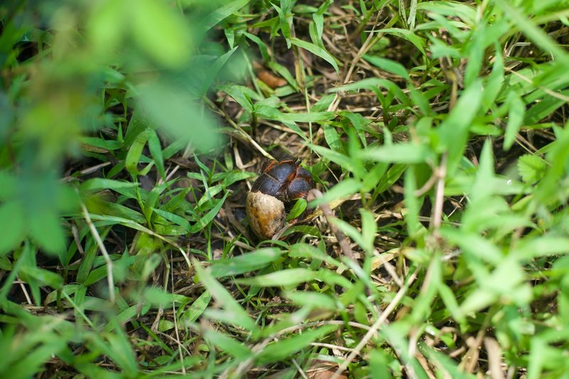 A hermit crab crosses the trail. If you keep on the lookout, frogs, lizards, and crabs can be seen scurrying across the trail beneath you.