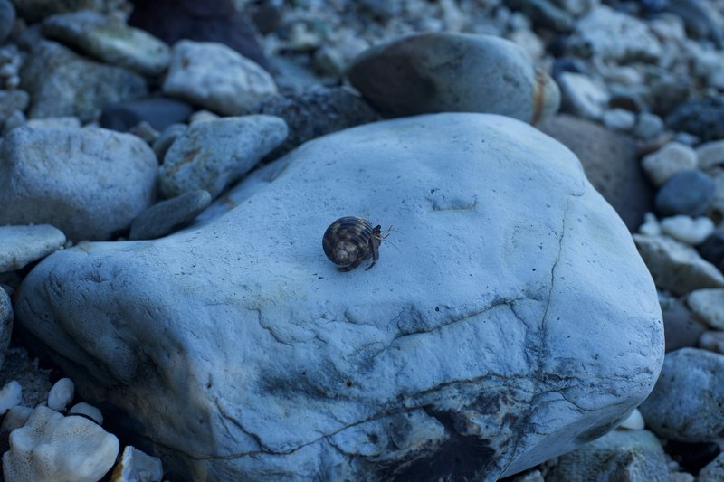 Hermit crab making his way across this rock.