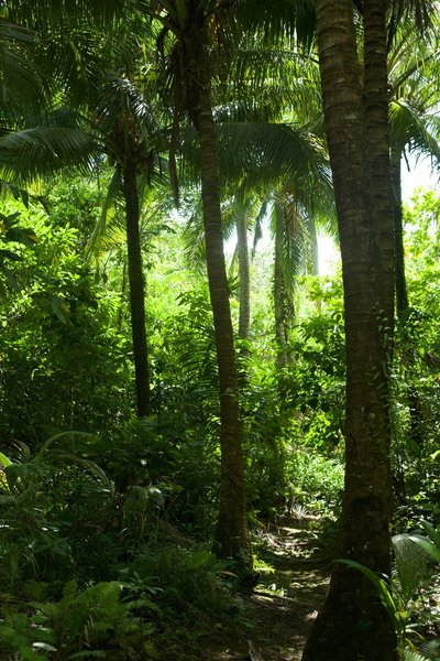 The trail passes through a stand of coconut trees, so watch your head for falling coconuts.