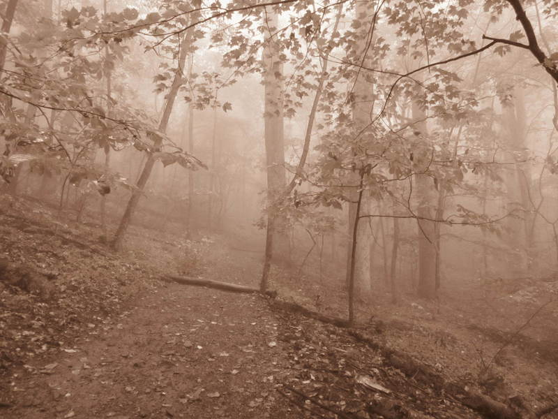 20110919 17 Sharp Top Trail, Peaks of Otter, Virginia