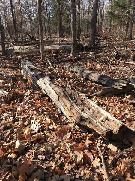 Lots of debris on trail near shoreline.