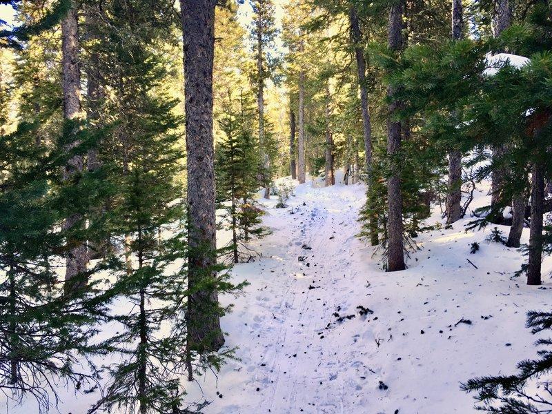 Snowshoeing Waldrop Trail