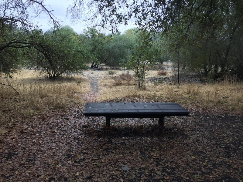 Bench along Riverview Trail