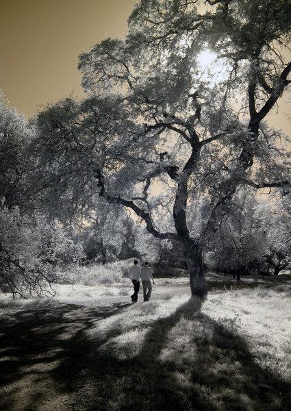 Walkers on Meadow Trail
