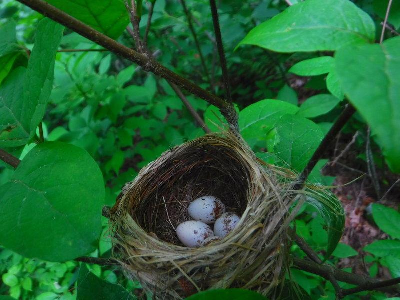 A bird's nest somewhere between Fowler Mtn. and Halloway Gap.