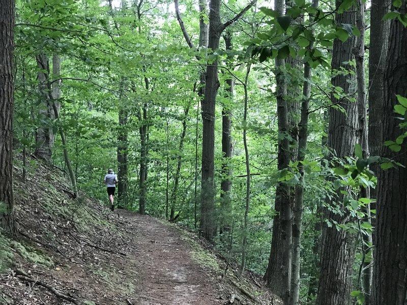 "Ridge trail section with full foliage"" Photo courtesy of Ottawa County Parks & Recreation."