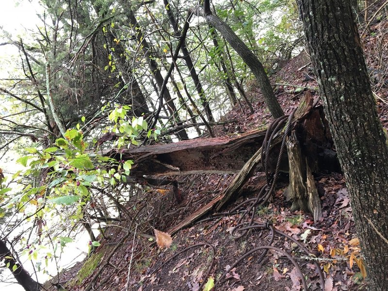 This downed tree has an old cable attached that can be used to rap to the bottom of a bluff.