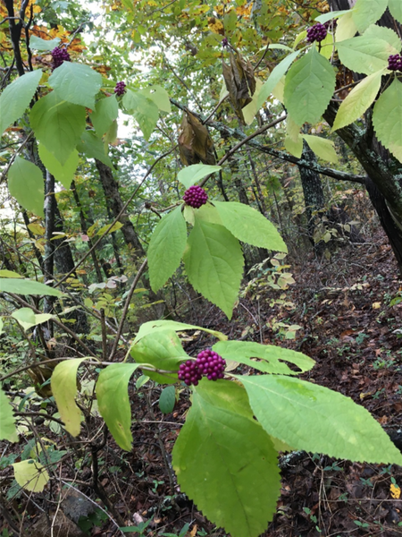 More wild berries found along the way!