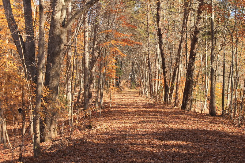 The trail quietly winds through Alexander's Ford