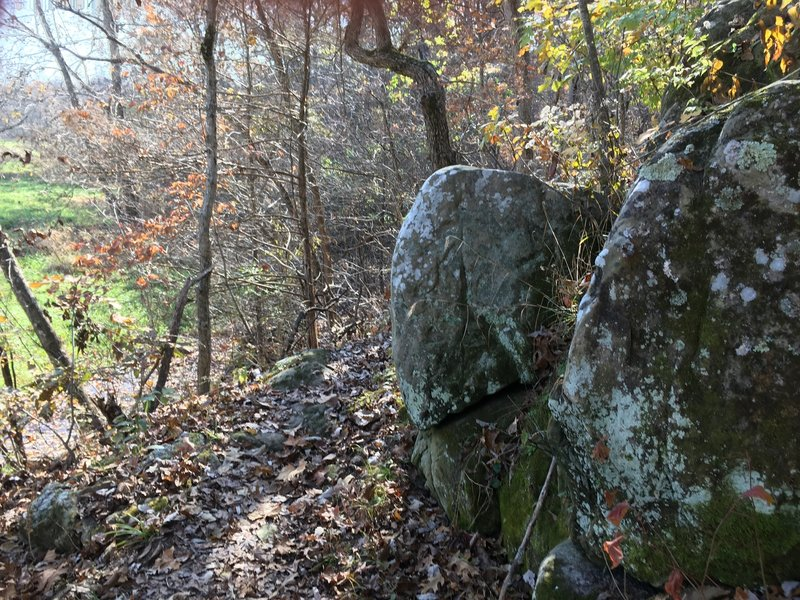 Some of the only boulders found on this trail. Unfortunately they're too small to climb or have any fun on!