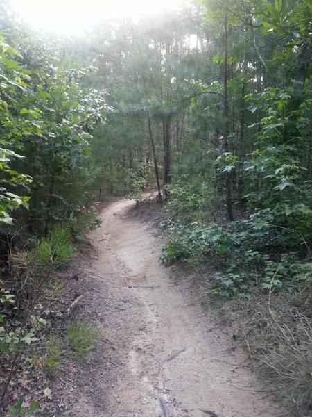 Stewardship Trail decsent