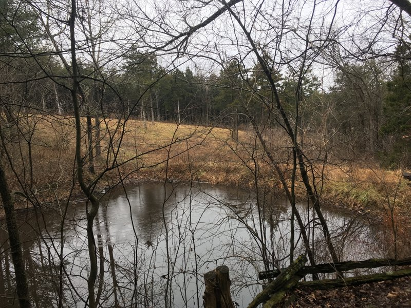 A pond will come into view shortly after twisting through the trees.