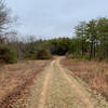 Looking north from the Pine Barrens Trail.