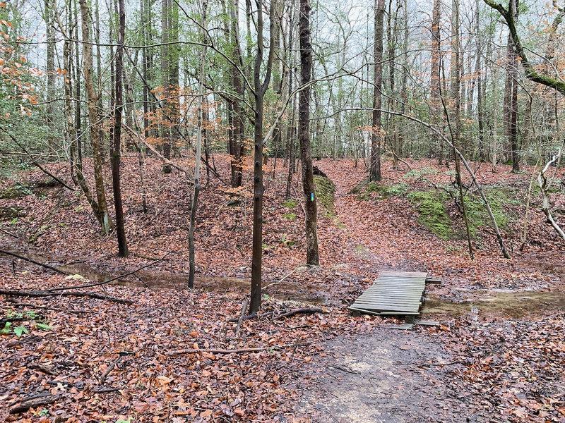 Footbridge over Plummer Branch on the Beaver-Rock Trail.