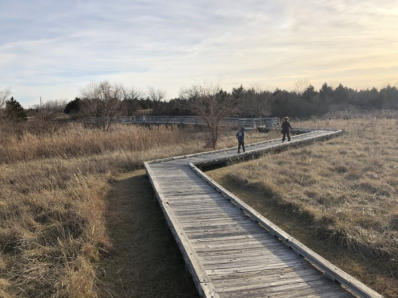 raised boardwalk over the wetlands area