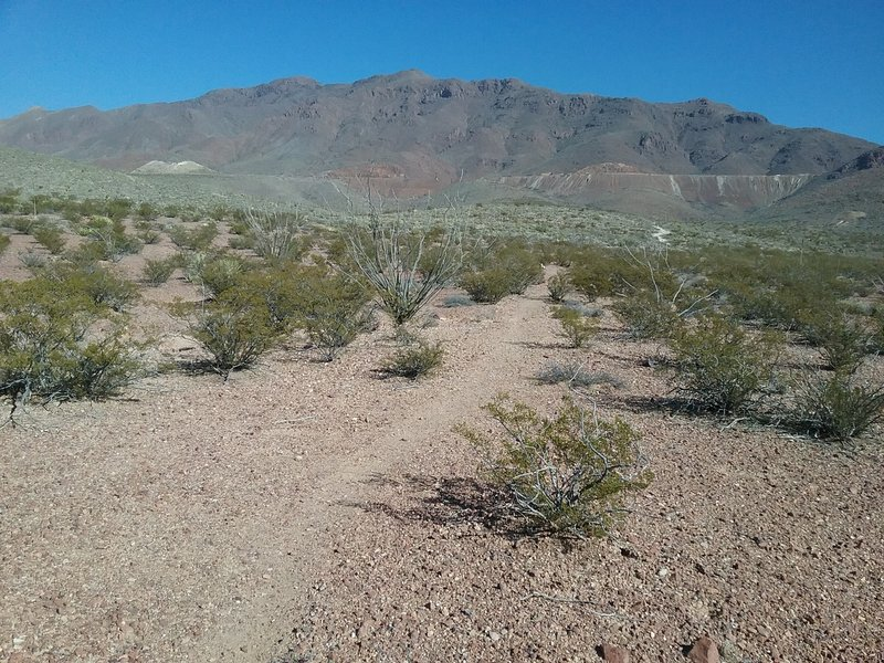 Looking east from the trail