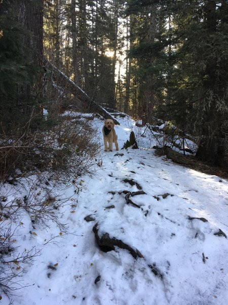 12/23/2019. Winter trail is icy at first but packs down just after the falls.