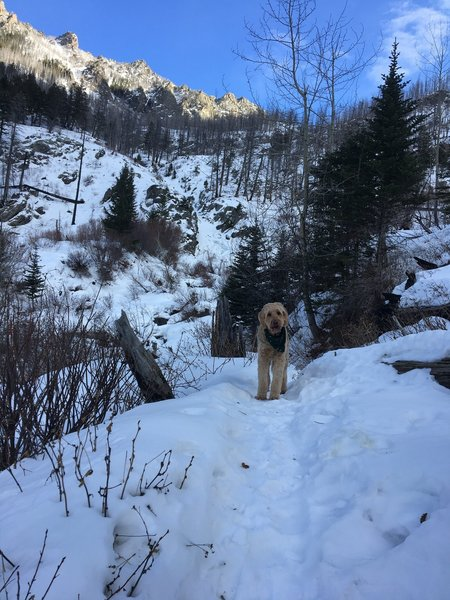 12/23/2019. The trail is no longer packed down at about mile 3, just after crossing pine creek, where this photo was taken.