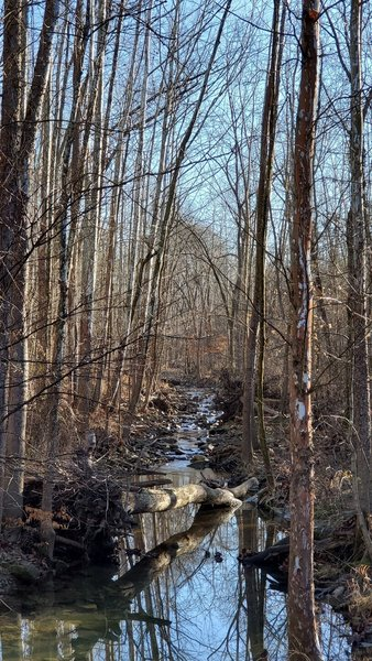Creek through the woods.