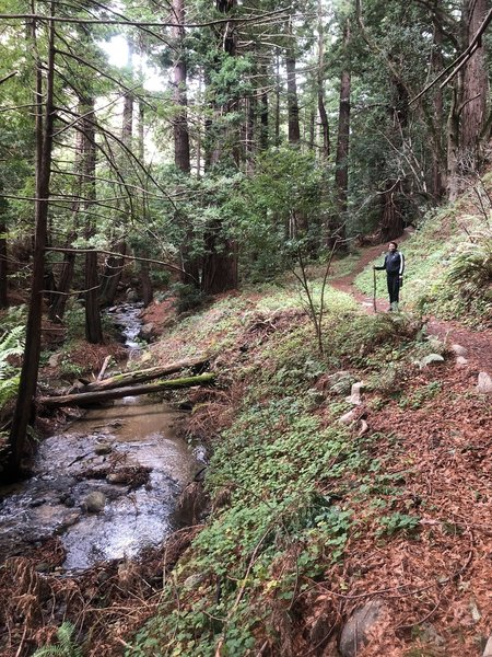 Midway between the parking and the Rocky Trail... Meandering stream that we have to cross many times.