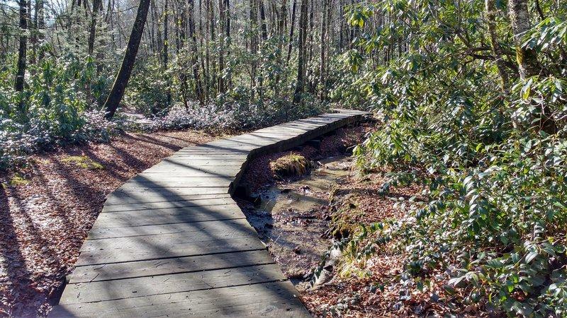 Boardwalk on lower section of Little Green Trail.