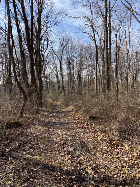 Beginning of Quarry Trail