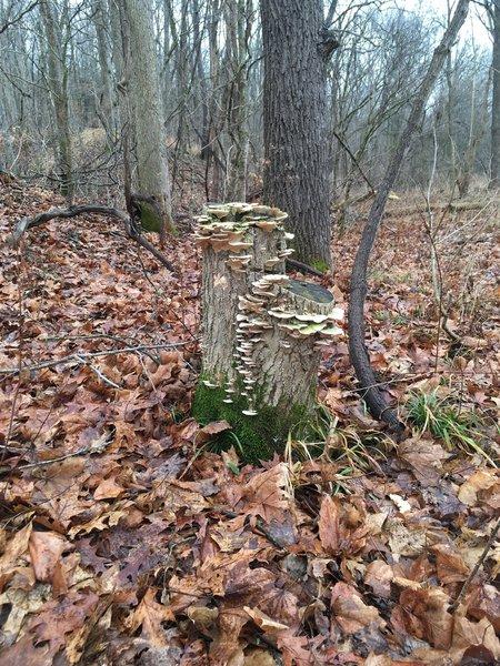 Fungus along the trail!