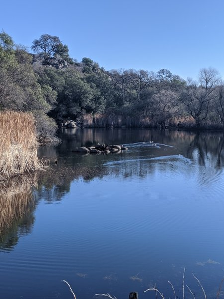 A bouldery pond popular with waterfowl