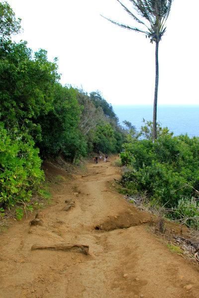 Awini Trail path