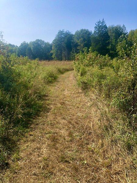 Grassy trail through the meadow