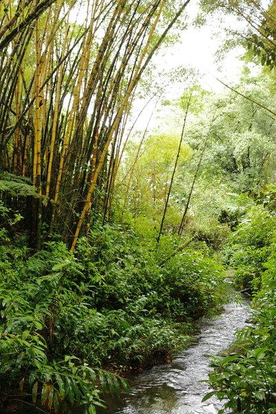 Akaka Falls State Park, Pepeekeo (504219)
