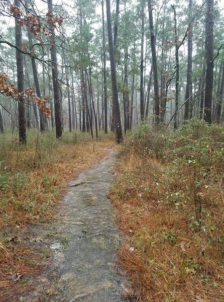 Lone Star Hiking Trail Section 1 Little Lake Creek Wilderness Near Mile Marker 1 Flowing Water on the Trail During Rain 06 January 2019
