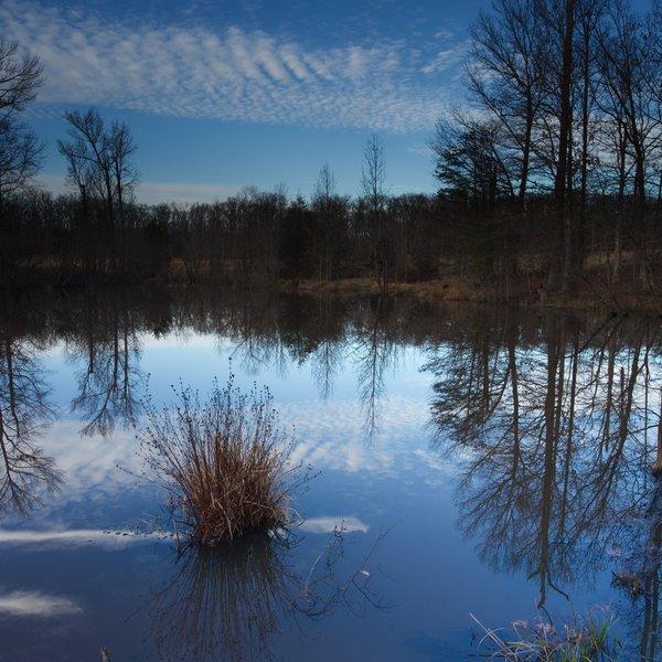 Hidden Pond