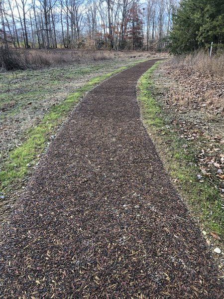 Rubberized mulch path leading to Hidden Pond (very strange trail surface)
