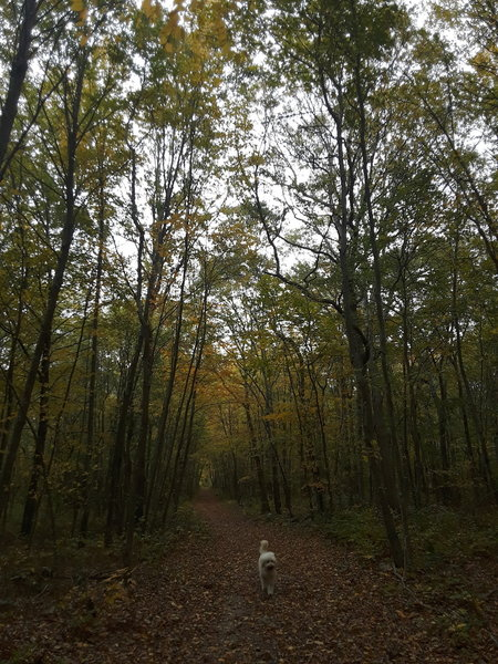 Walking along the North Fire Road in early autumn