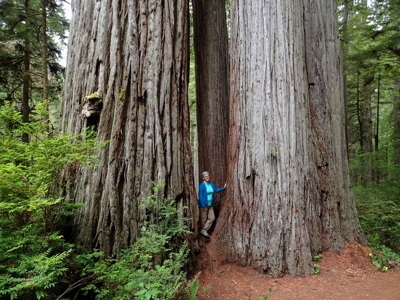 Among the redwoods on the way to the Boy Scout Tree