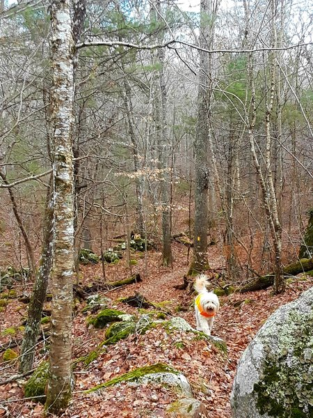 Descending with Jack along the Bald Hill Brook Trail