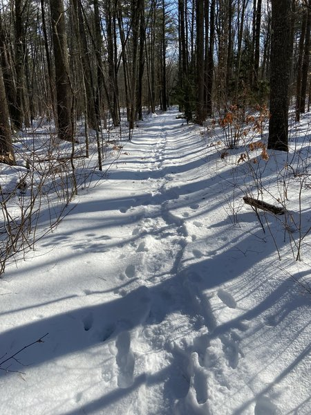 One of the trails in Scoutland, 1/5/20