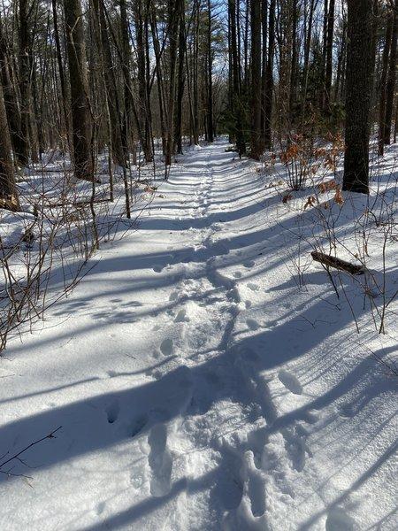 Snowy trail in Scoutland.